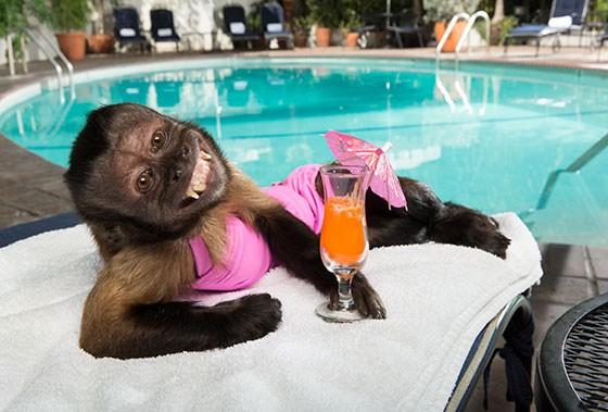 Маймуната Кристъл