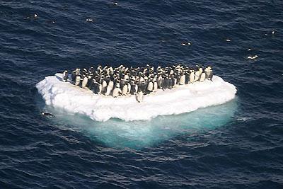 Глобалното затопляне, пингвини