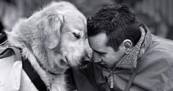 Кучетата ни разбират. Защо?