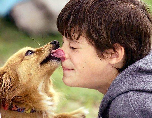 целувка от куче
