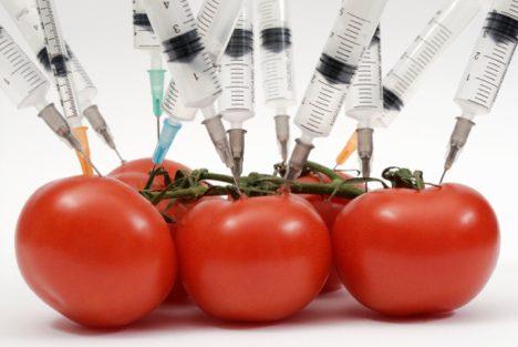 ГМО, домати