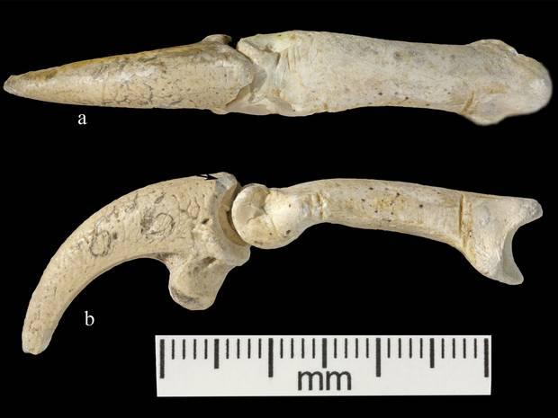 Неандерталски бижута