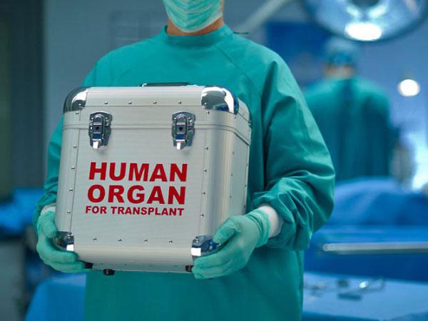Трансплантация на пенис