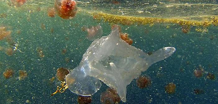 Морски създания