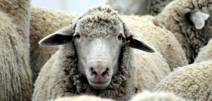 овче мляко от Родопите бори три вида рак