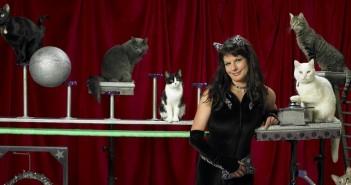 котки, цирк, музей