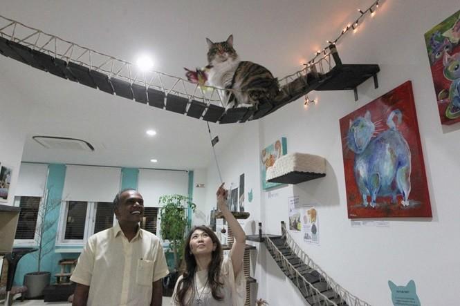 котки, музей