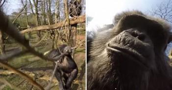 шимпанзе свали дрон с клон