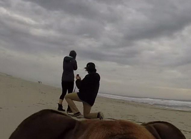 куче засне предложение за брак с камера