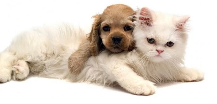 алергии, котки, кучета