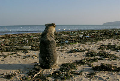 Куче на море