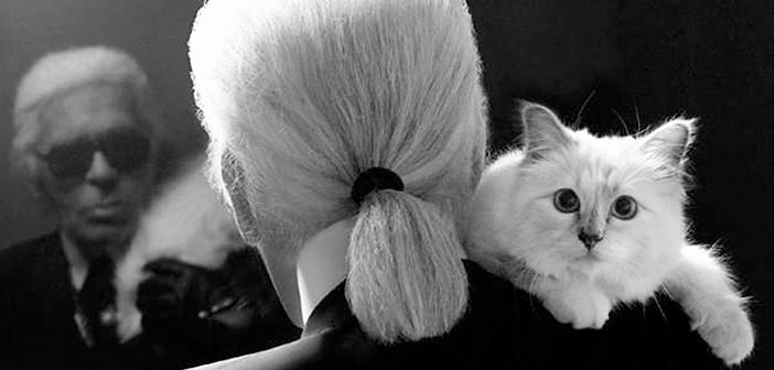 lagerfeld котка