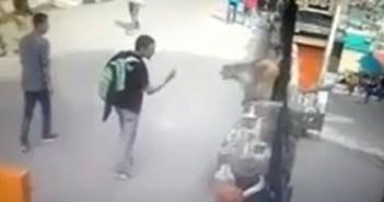 Турист показа среден пръст на маймуна в Индия