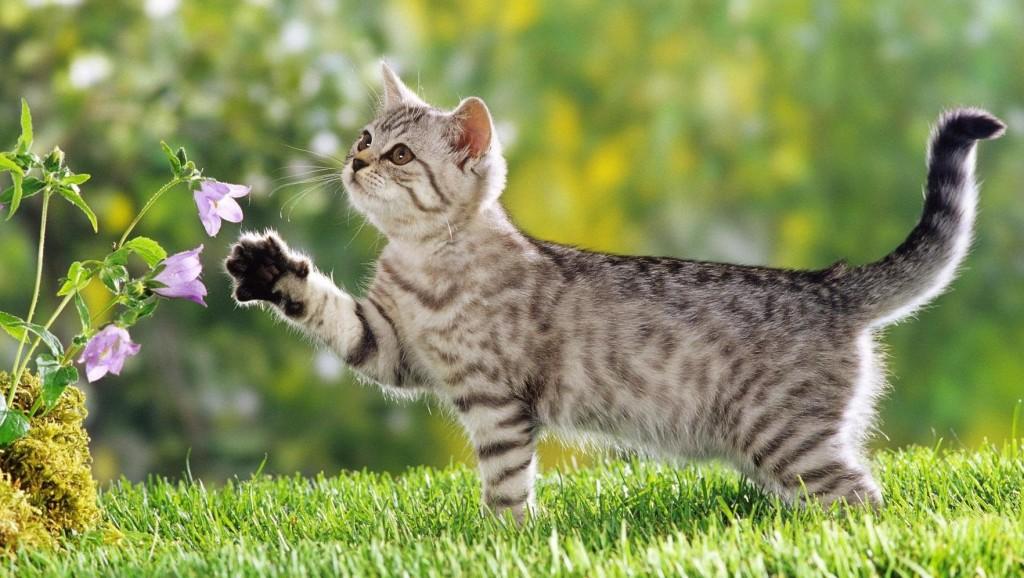Котките и техният начин на общуване с хората