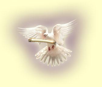 message-dove