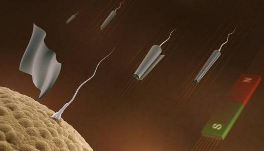 роботи сперматозоиди