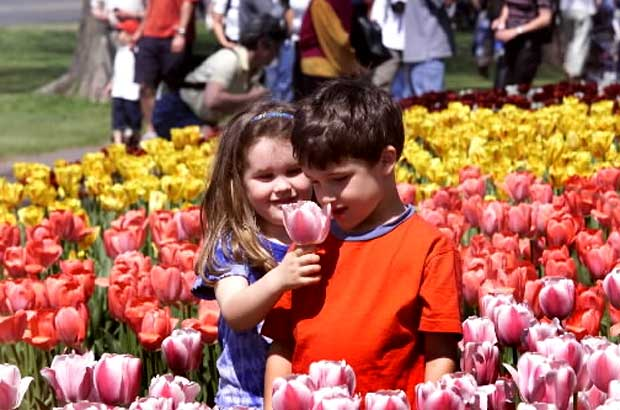Цветна феерия в Отава - започна фестивалът на лалетата