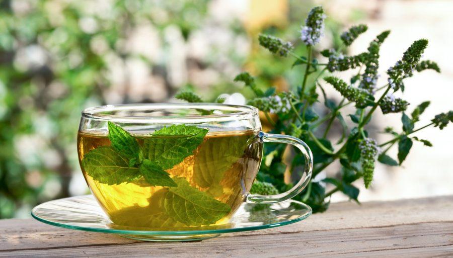 nikotin-green tea
