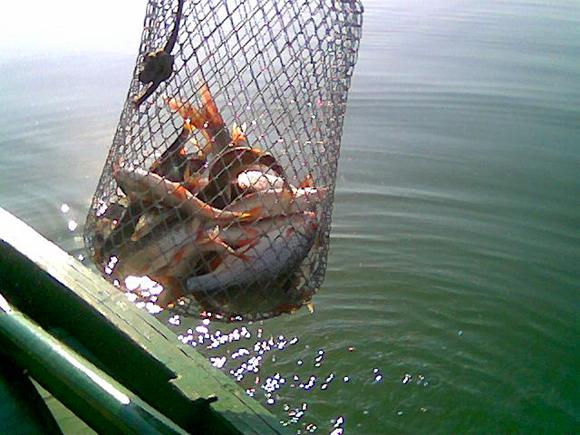 riba-sezoni2