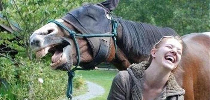 Мимики при конете и хората