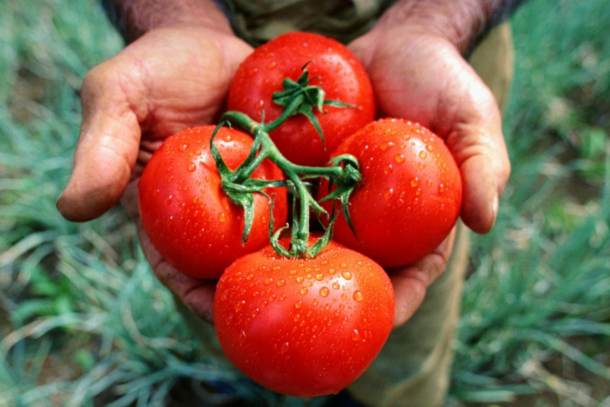 По-вкусни домати от магазина! Как?