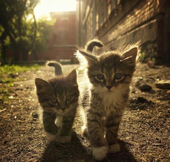 Котки, котките