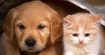 домашни любимци, котка, куче