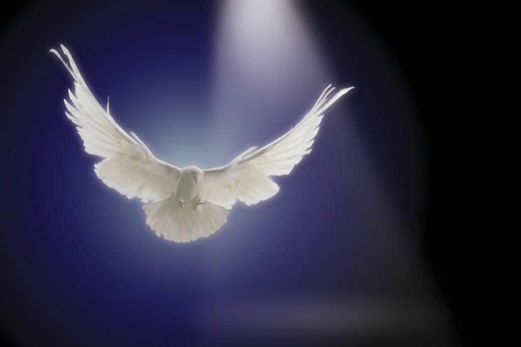 Dove flying through beam of light