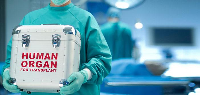 матка, трансплантация, инвитро