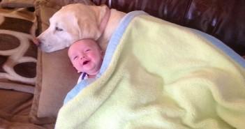 бебе вие като куче