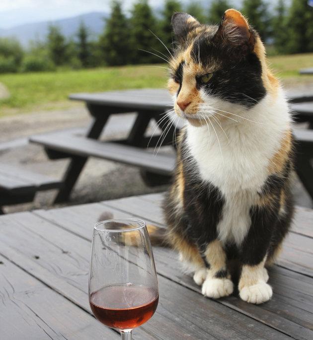 котарак, Альоша, махмурлук, вино