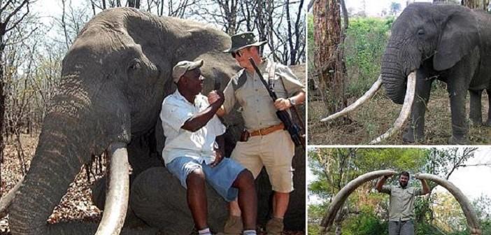 слон убит в Зимбабве
