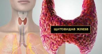 червен лук, щитовидна жлеза