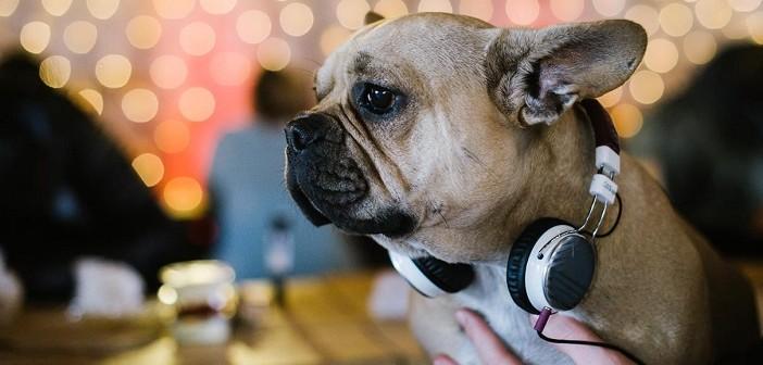 dog, monday, куче, понеделник