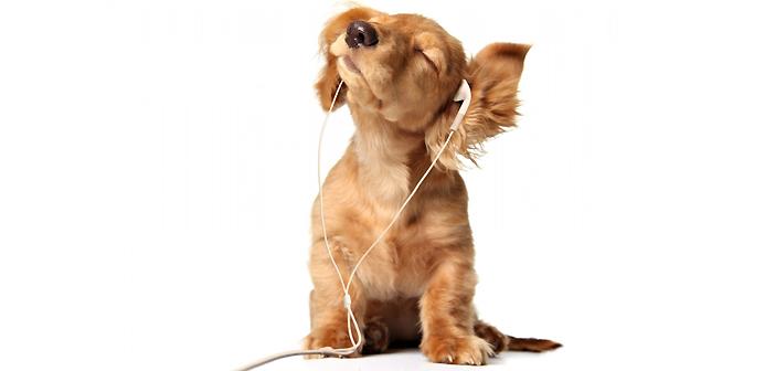 избягай в музиката петък
