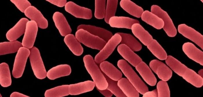 Ешерихия коли, бактерия, бактерията, затлъстяване