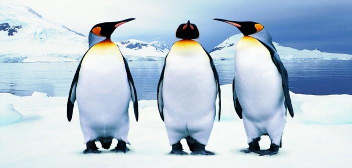 Защо пингвините могат да намалят самолетните катастрофи?