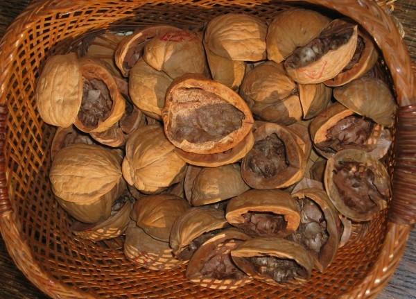 орехови черупки, орехи, черупки