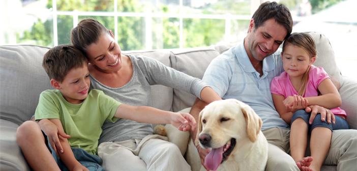 кучетата, куче, здраве, деца