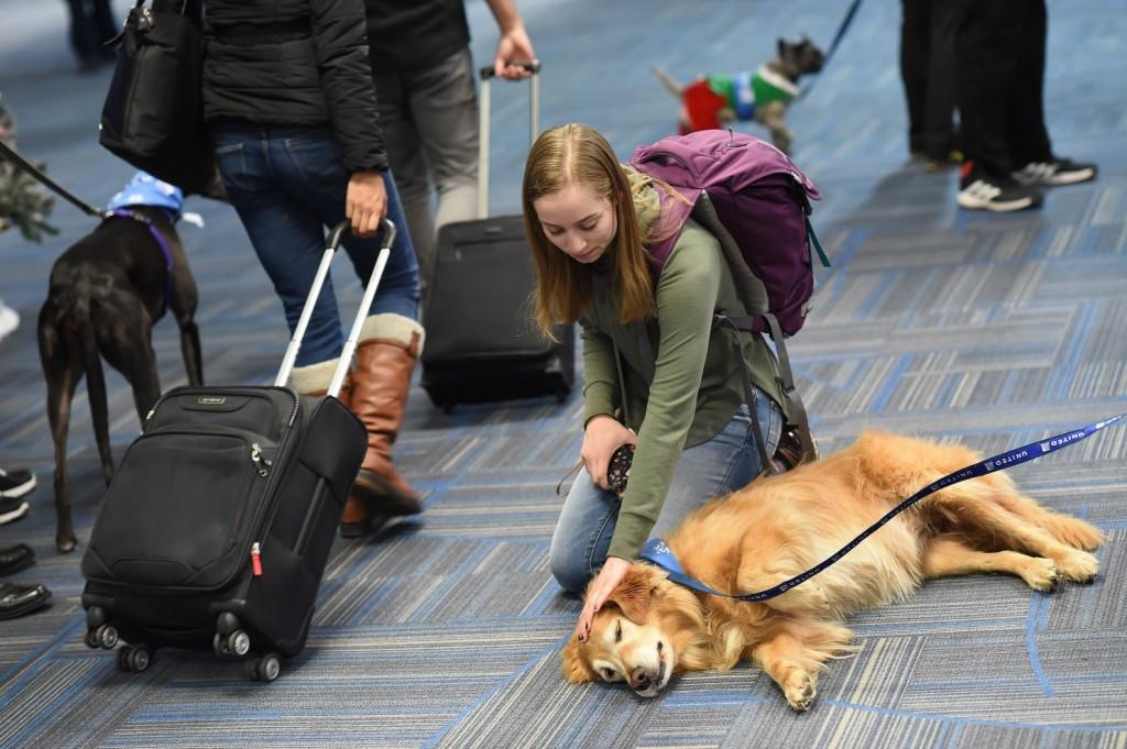кучета, стрес, самолет, полет, авиокомпания, самолетни билети, евтини самолетни билети, check.bg