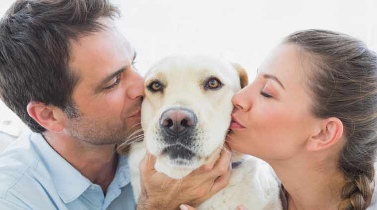 Кучетата са най-верните домашни любимци, но знаете ли, че тяхното влияние върху човешкия организъм има и оздравителен ефект?