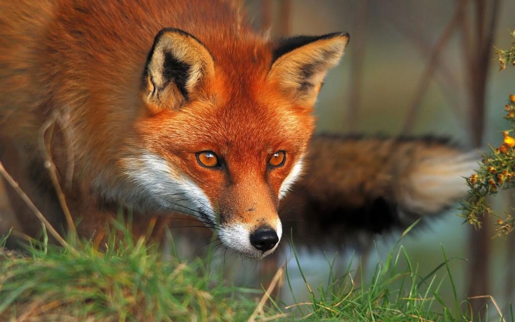 На кое диво животно приличаш според името си?