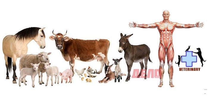 ветеринарни лекарства за хора