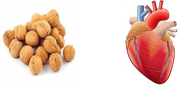 полезни ли са орехите