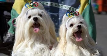 кучета, карнавал, каишка