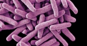 Отблясъци, Mycobacterium tuberculosis