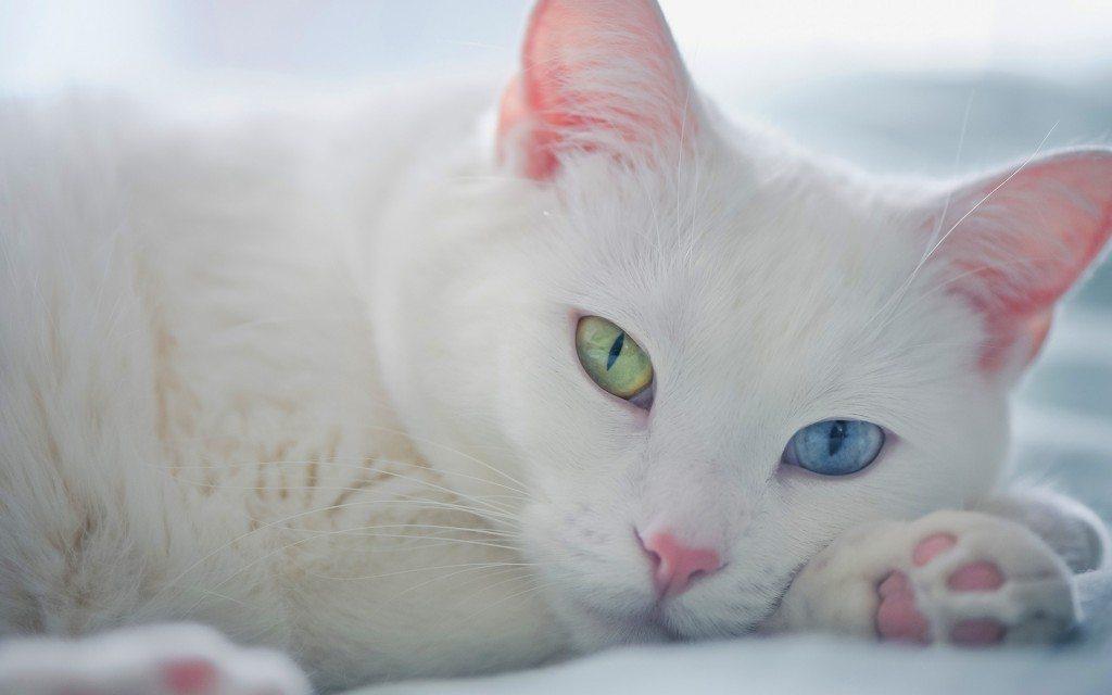 Какви болести откриват и лекуват любимите ни котки?