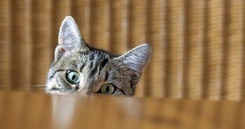 защо котките потупват купичката с вода
