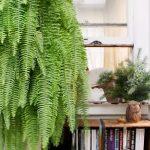 растения за добър сън