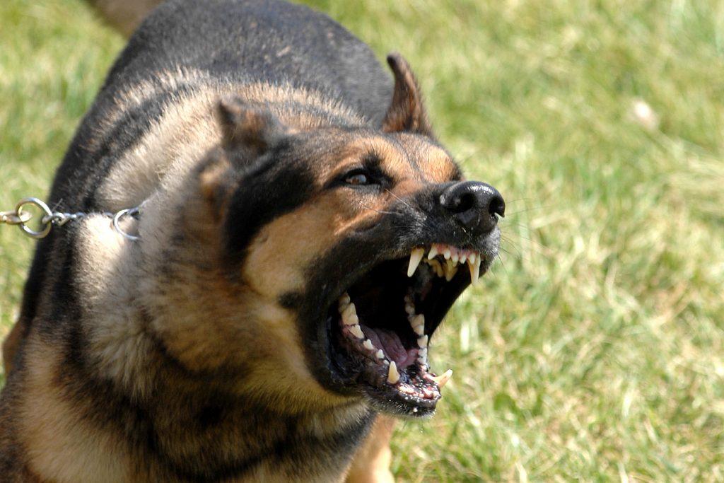 кучето е едно от най-опасните животни в България